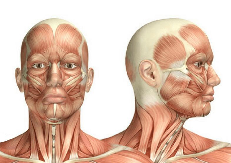 dores cabeça tratamento
