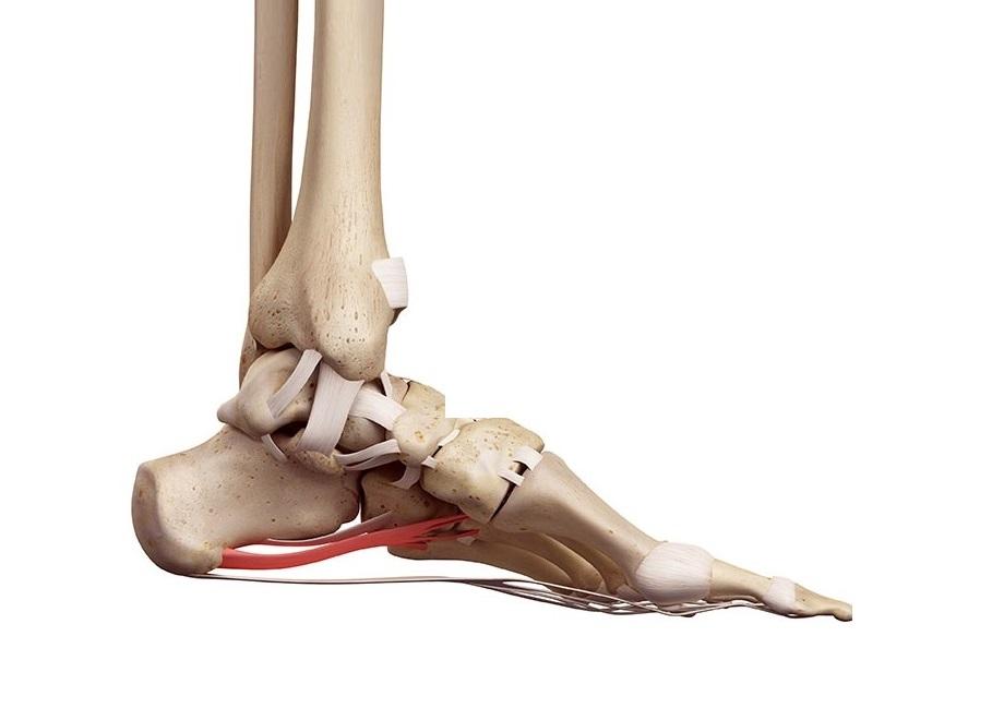 tratamento dor pé, calcanhar, tornozelo